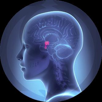 dermaline-endocrinologia-patologias-imagem-hipofise-thumb