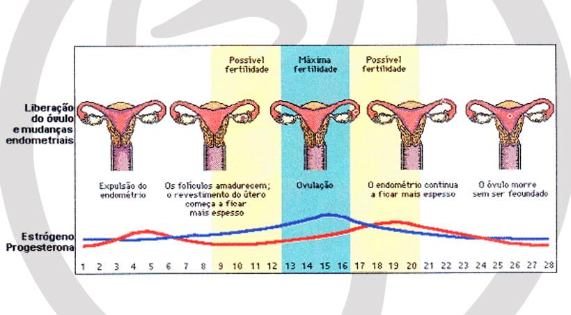 Imagem Ciclo Menstrual