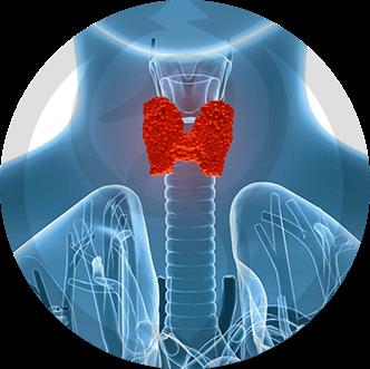 Patologias Endocrinológicas